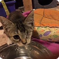 Adopt A Pet :: Emmy - Delmont, PA
