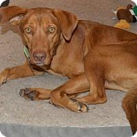 Adopt A Pet :: Fayet - Alpharetta, GA