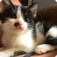 Adopt A Pet :: Nellie - Austin, TX