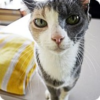 Adopt A Pet :: Cherry - Xenia, OH