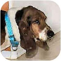 Adopt A Pet :: Pete - Phoenix, AZ