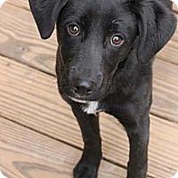 Adopt A Pet :: Asher - Tunbridge, VT