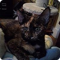 Adopt A Pet :: Aura - St. Louis, MO