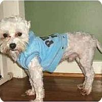 Adopt A Pet :: Zachary - Mooy, AL