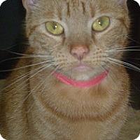 Adopt A Pet :: Rita - Hamburg, NY