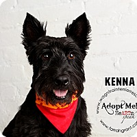 Adopt A Pet :: Kenna - Omaha, NE