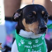 Adopt A Pet :: Titan - Alpharetta, GA