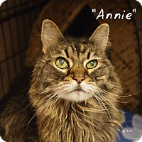 Adopt A Pet :: Annie - Ocean City, NJ