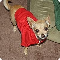 Adopt A Pet :: Oren - 6 lbs!  Quiet! - Yorba Linda, CA