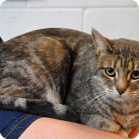 Adopt A Pet :: Tiger - Parsons, KS