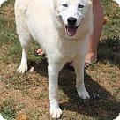 Adopt A Pet :: Fluke