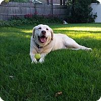Adopt A Pet :: Berkley - Grand Rapids, MI