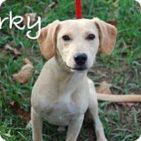 Adopt A Pet :: Corky - Minneola, FL