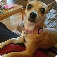 Adopt A Pet :: Biscuit - Hayes, VA