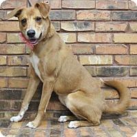 Adopt A Pet :: London - Benbrook, TX