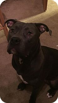 American Pit Bull Terrier Mix Dog for adoption in Anchorage, Alaska - Delilah