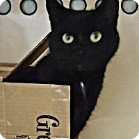 Adopt A Pet :: Toothless - Rocky Hill, CT