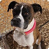 Adopt A Pet :: Shadow - Costa Mesa, CA