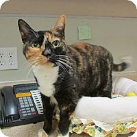 Adopt A Pet :: Bonnie Mae - Gilbert, AZ
