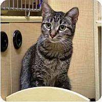Adopt A Pet :: Macie - Irvine, CA