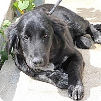 Adopt A Pet :: Brenda*ADOPTED!* - Chicago, IL