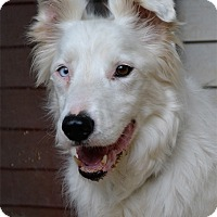 Adopt A Pet :: Finley - Bellevue, NE