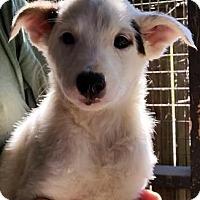 Adopt A Pet :: Claudette - Gainesville, FL