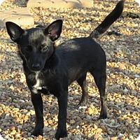 Adopt A Pet :: Luna - Ball Ground, GA