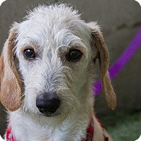 Adopt A Pet :: Raider - Mission Viejo, CA