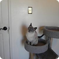 Adopt A Pet :: Grayson - Fayetteville, TN