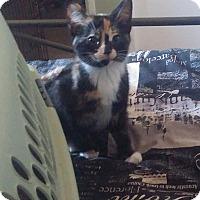 Adopt A Pet :: Camry - Edmonton, AB