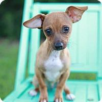Adopt A Pet :: Nala - Peachtree City, GA