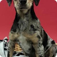 Adopt A Pet :: Wally - Decatur, AL