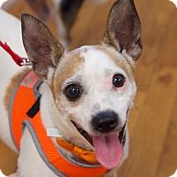 Adopt A Pet :: Barney - Nashville, TN