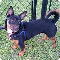 Adopt A Pet :: BAXTER - Fort Worth, TX