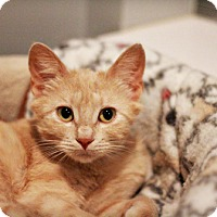 Adopt A Pet :: Casey - Lincoln, NE