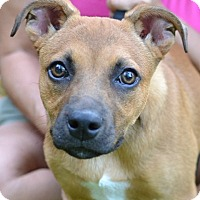 Adopt A Pet :: Charlie - Enfield, CT