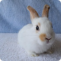 Adopt A Pet :: Sweetie - Fountain Valley, CA