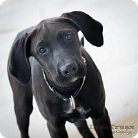 Adopt A Pet :: Summer - Frisco, TX
