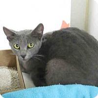 Adopt A Pet :: SAPPHIRE - Carlsbad, CA