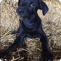 Adopt A Pet :: Dodson - Hamburg, PA