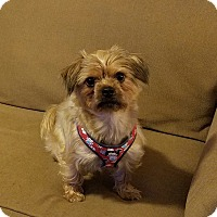 Adopt A Pet :: Toby - Staten Island, NY