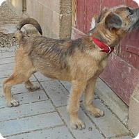 Adopt A Pet :: Boomer - Yucaipa, CA