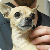 Adopt A Pet :: Karina - Salem, WV