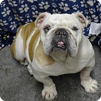 Adopt A Pet :: Tillie - Santa Ana, CA