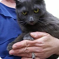 Adopt A Pet :: Frou Frou - Albemarle, NC