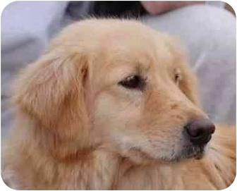 Adult Female Dogs For Adoption Nova Scotia