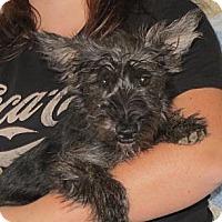 Adopt A Pet :: Estell - Salem, NH