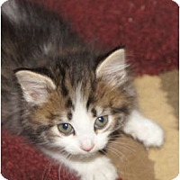 Adopt A Pet :: Monica - Xenia, OH