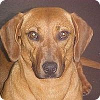 Adopt A Pet :: Mandy - Fulton, NY
